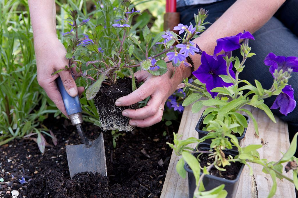 the essential garden jobs for june the handy mano manomano summer bedding plants planting