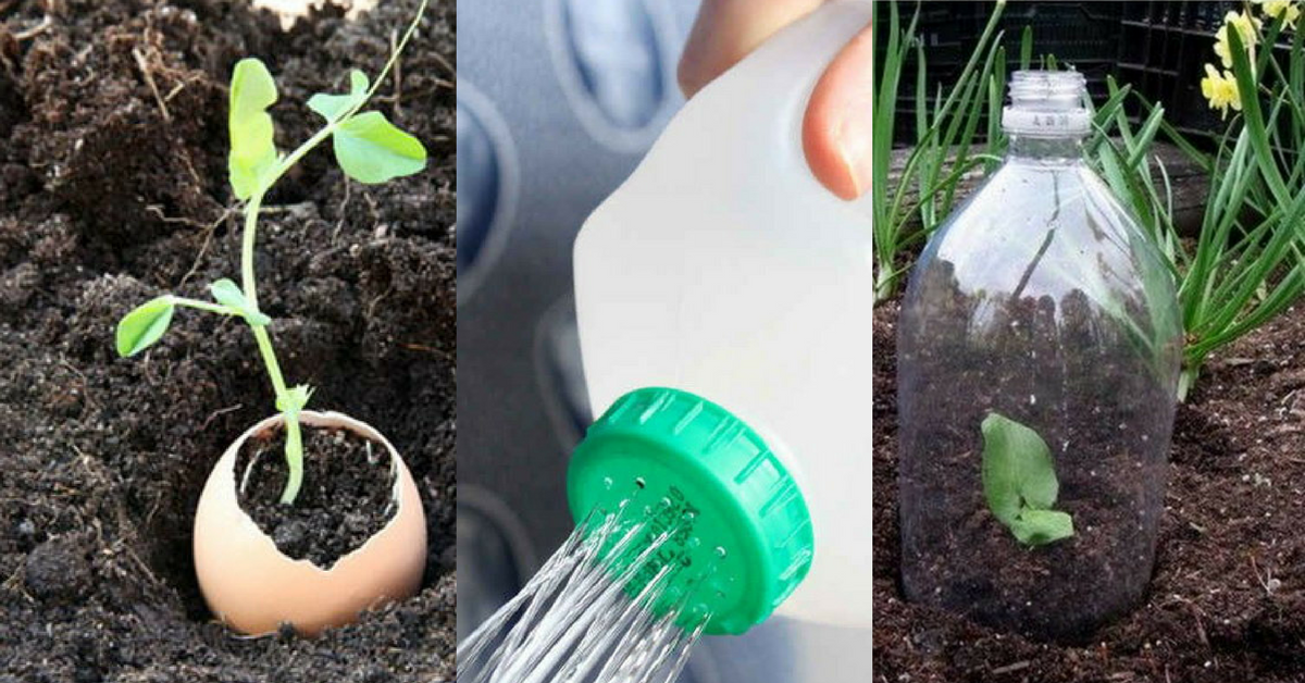 simple and cheap gardening tricks The handy mano manomano milk bottle watering can egg shell seed planter water protect soil