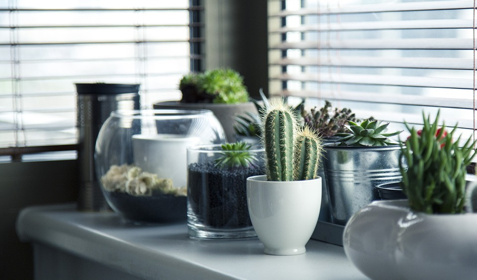 Awesome How To Grow A Cactus: Desert Glamour On Your Windowsill The Handy Mano  Manomano Gardening