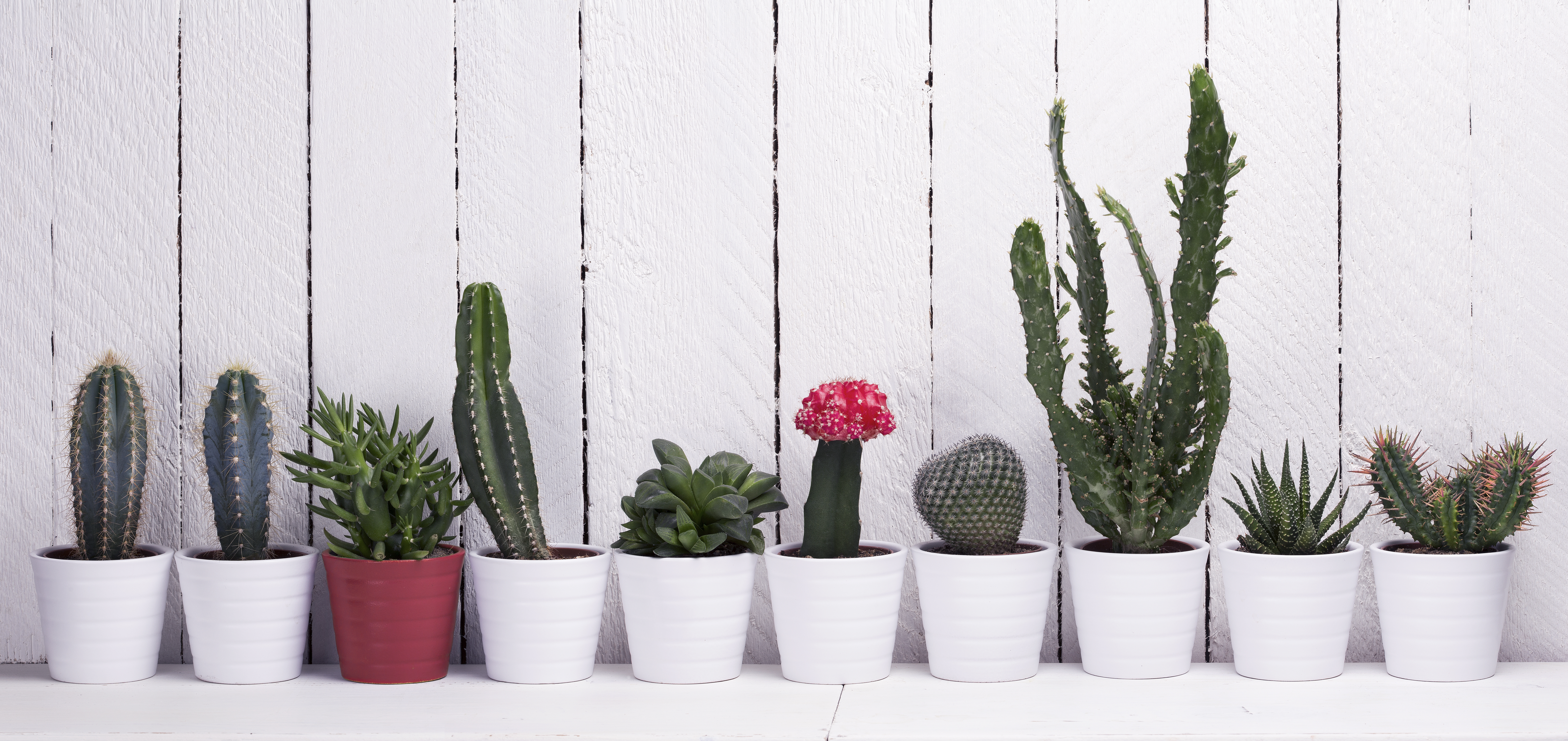 How To Grow A Cactus: Desert Glamour On Your Windowsill The Handy Mano  Manomano Gardening