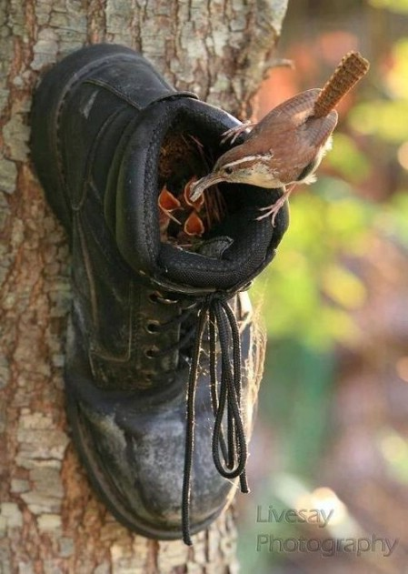 8 Simple Ways to Make a DIY Bird Feeder home made bird feeders easy simple make your own handy mano manomano shoe