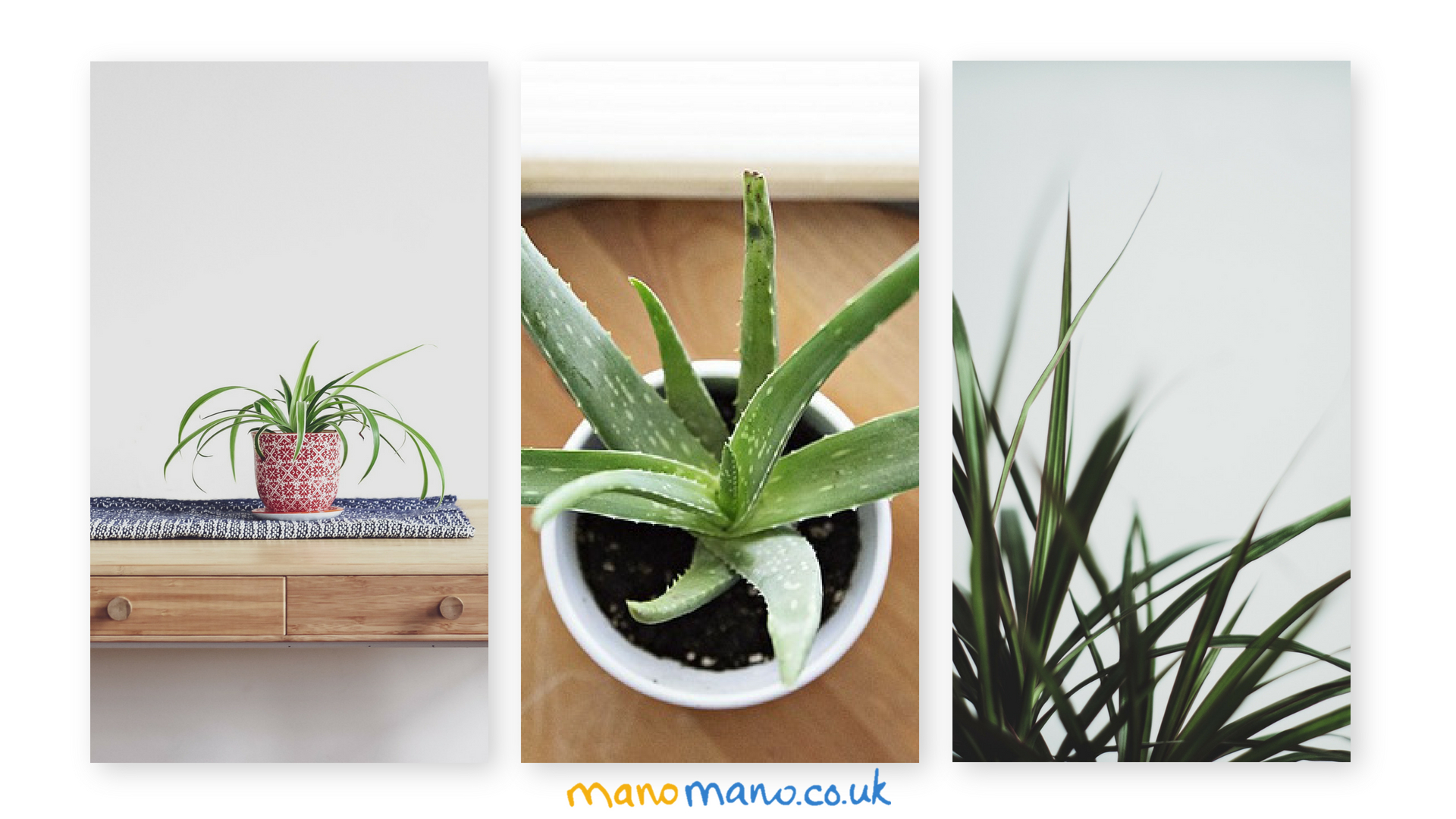 indoor house plants inspiration cover photo