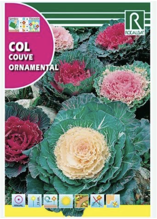 Ornamental cabbage can be a good addition to your winter garden
