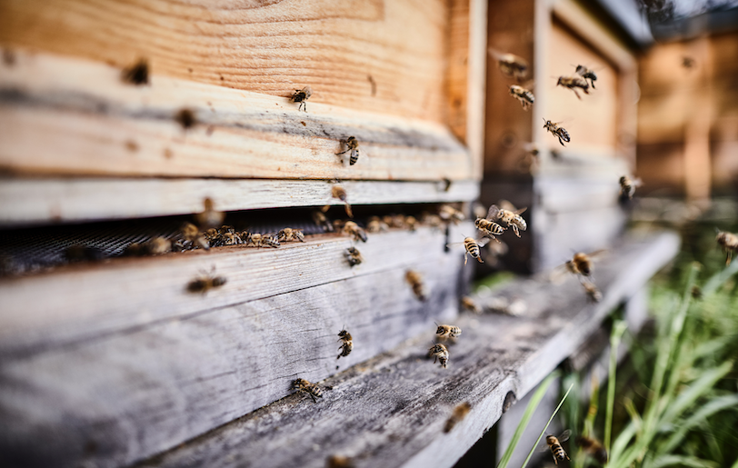 Beekeeping for beginners: A step-by-step guide