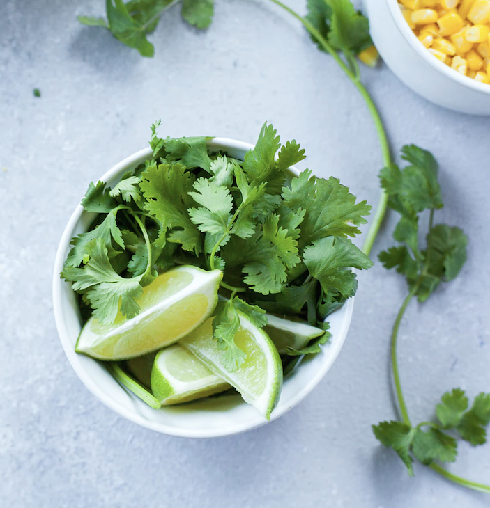 Coriander is an easy-to-grow herb